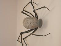 Spider I